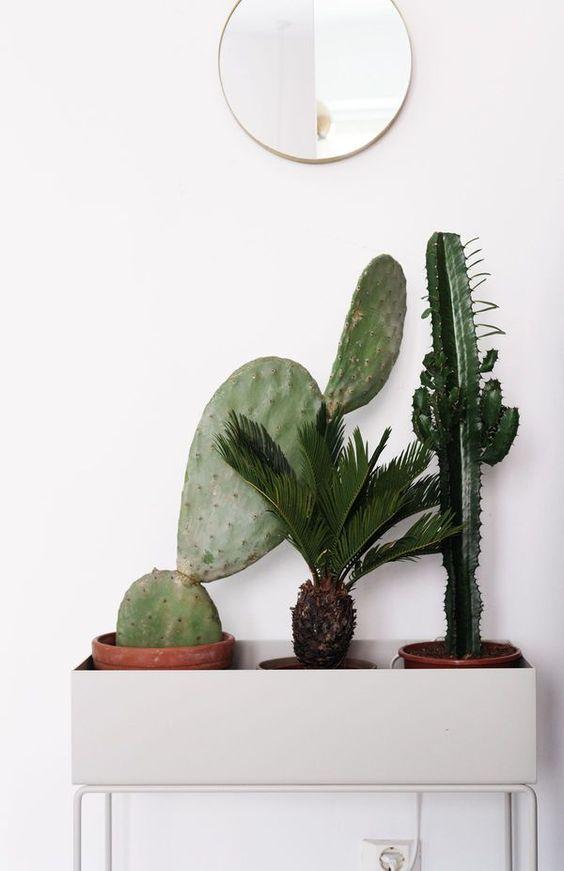 ferm living cacti